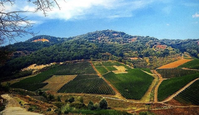 Vineyards in the hills behind Tufo